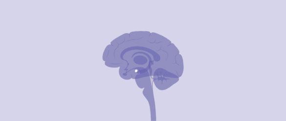 El síndrome de Klüver-Bucy