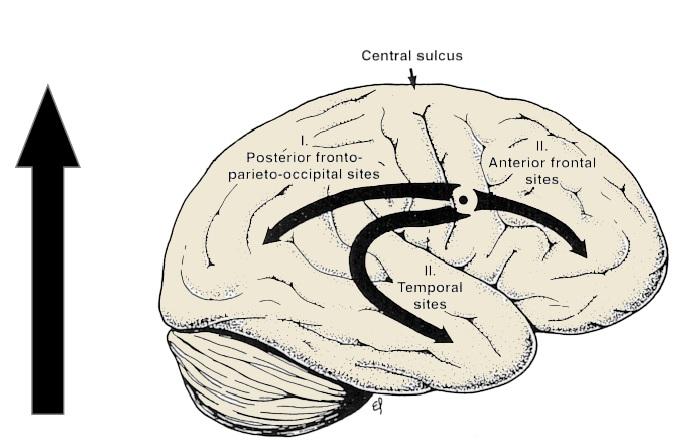 proceso de mielinización en el neurodesarrollo neuroclass