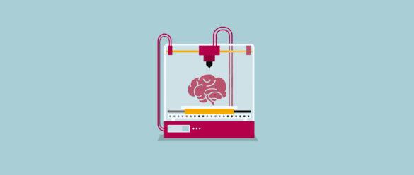 Organoides Cerebrales