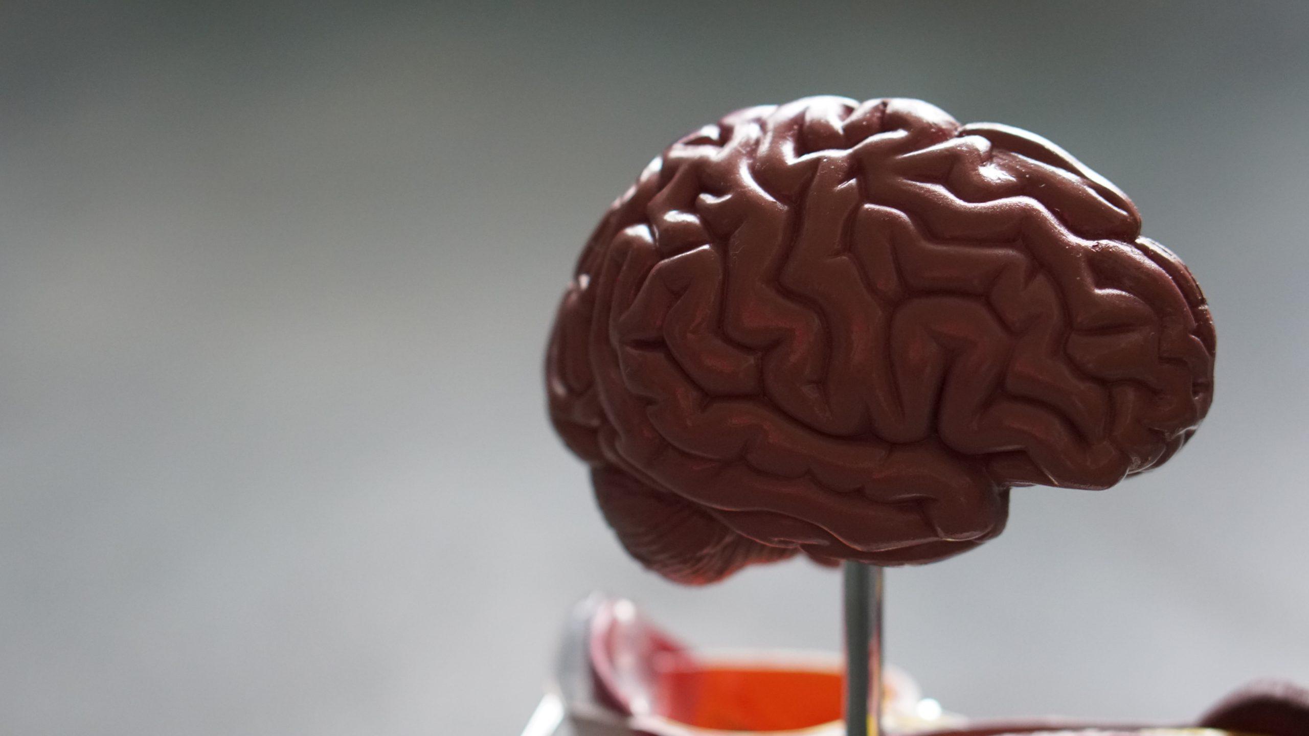plasticidad-neuronal-modificación-en-el-cerebro-neuroclass