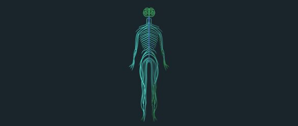 Portada - Sistema nervioso - NeuroClass