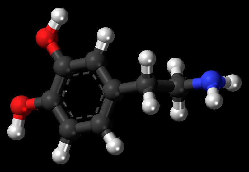 Neurobiología del amor - dopamina - NeuroClass